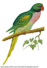 RSBL Parakeet Javan