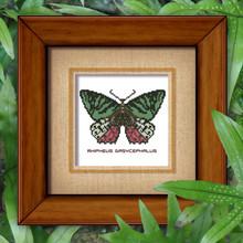 Butterfly Pattern 805