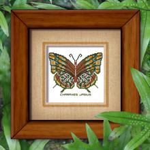 Butterfly Pattern 810