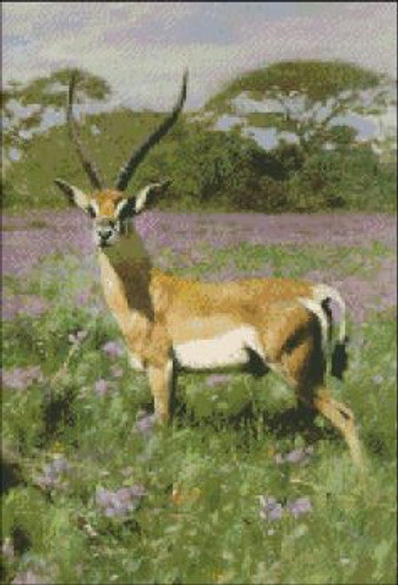 Gazelle Looking This Way