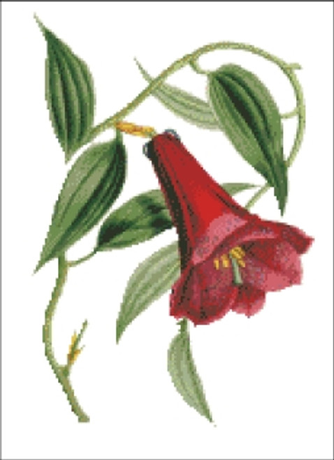Chilean Bellflower Cross Stitch Pattern