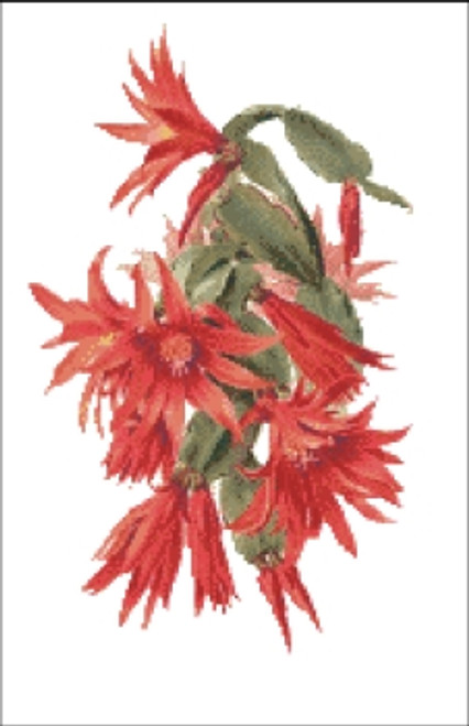 Christmas Cactus Flower Cross Stitch Pattern