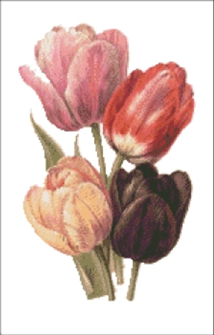 Darwin Tulips Cross Stitch Pattern