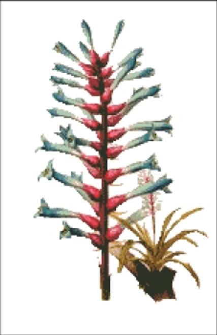 Epiphytic Bromeliad Flower Cross Stitch Pattern