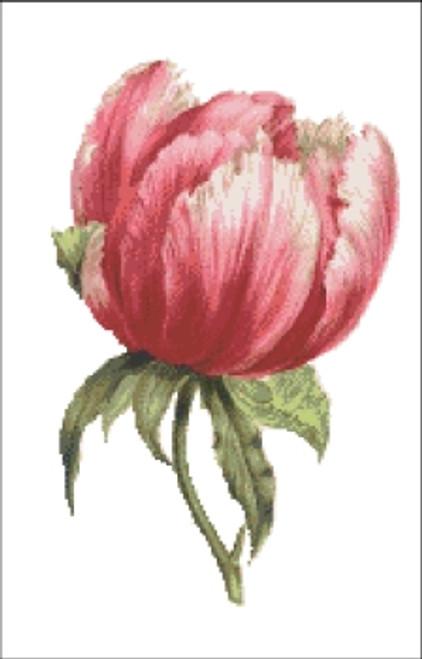 French Peony Flower Cross Stitch Pattern