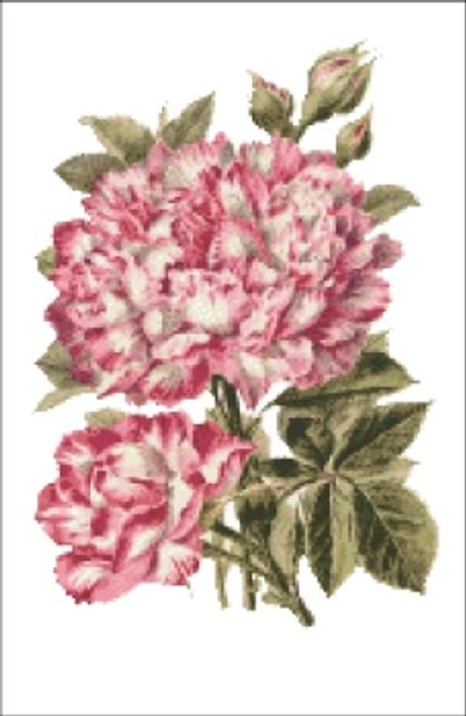 French Rose Cross Stitch Pattern