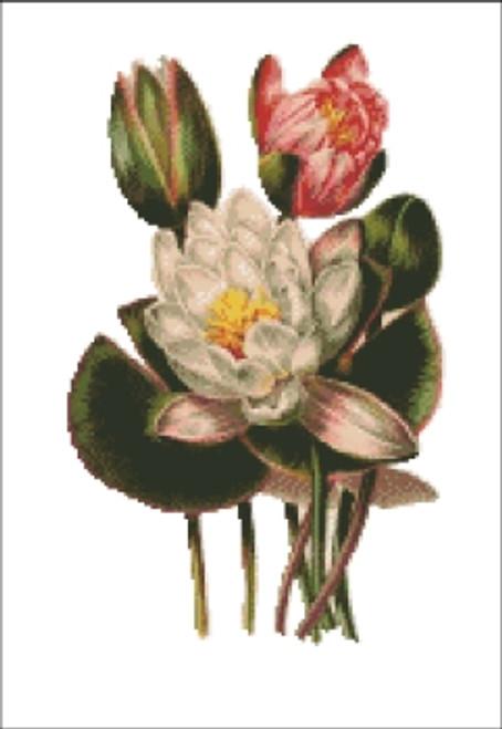Odorata Sh Flower Cross Stitch Pattern
