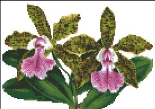 Orchid Pattern 702 (Cattleya Memoria Bleui)