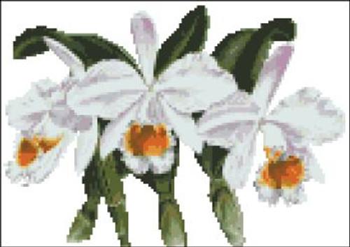 Orchid Pattern 703 (Cattleya Eldorado)