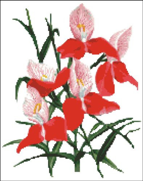 Orchid Pattern 710 (Orchid Grandiflora)