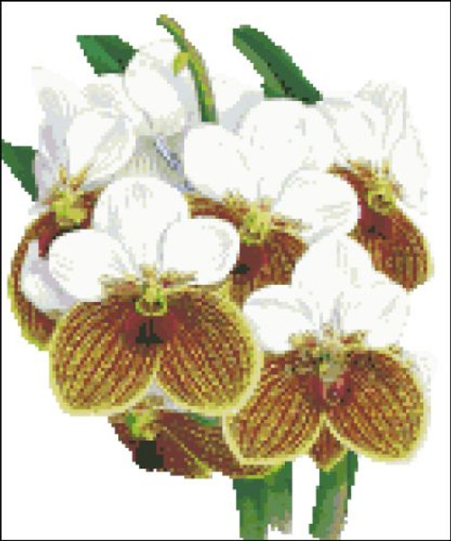 Orchid Pattern 712 (Orchid Sanderiana)