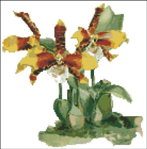 Orchid Pattern 714 (Orchid Odontoglossum Orande)
