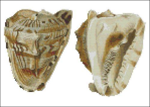 Sea Shell Pattern 802