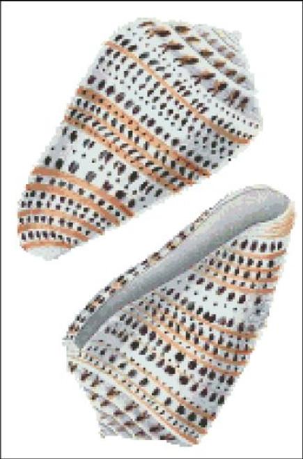 Sea Shell Pattern 804