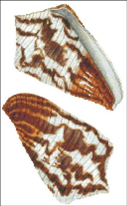 Sea Shell Pattern 807