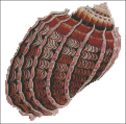 Sea Shell Pattern 809