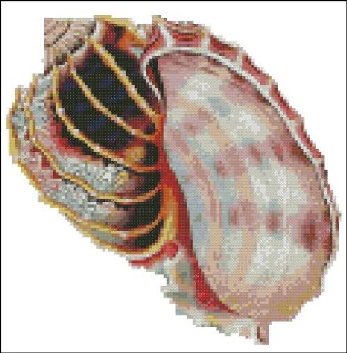 Sea Shell Pattern 810
