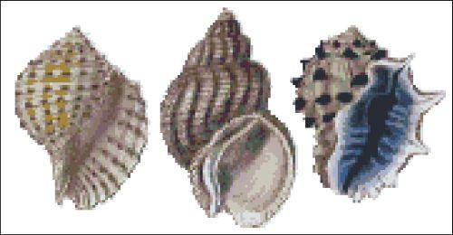 Sea Shell Pattern 811