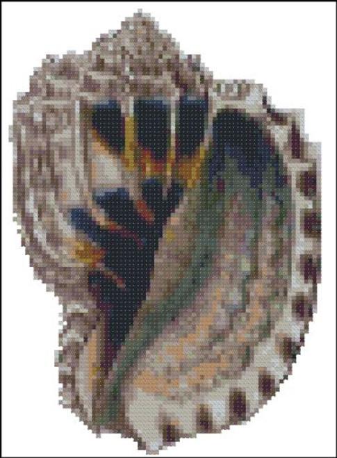 Sea Shell Pattern 812