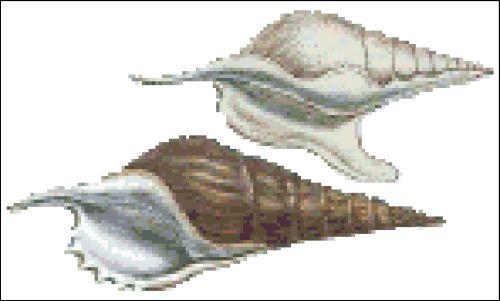 Sea Shell Pattern 814