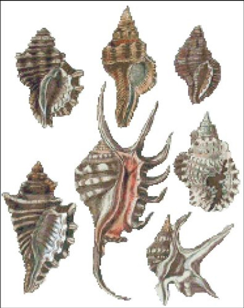 Sea Shell Pattern 815