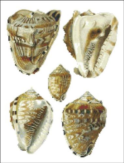 Sea Shell Pattern 817