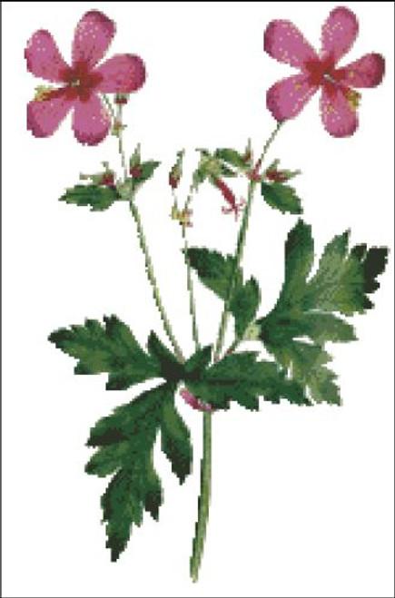 Anemone Geranium