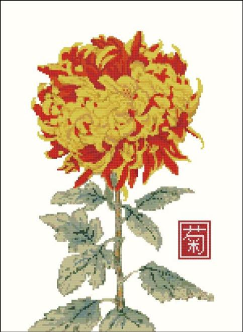 Japanese Chrysanthemum Yellow