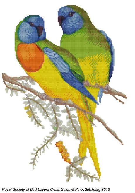 RSBL Parakeet Splendid