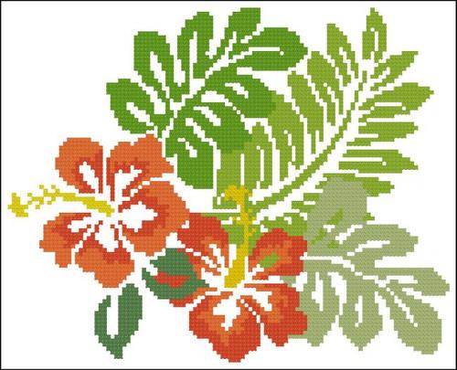 Hibiscus Tropical Orange