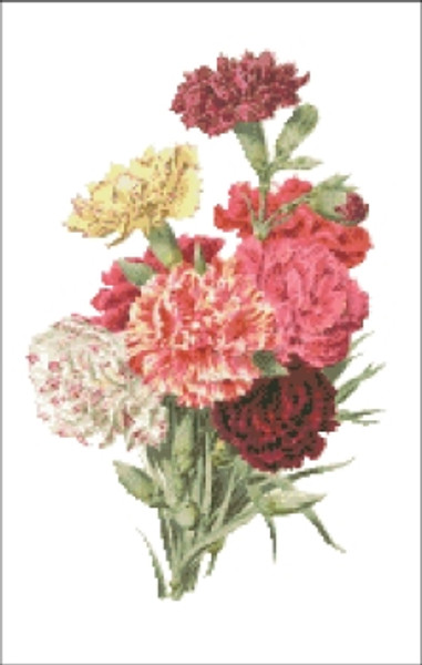 Carnation Flower Cross Stitch Pattern
