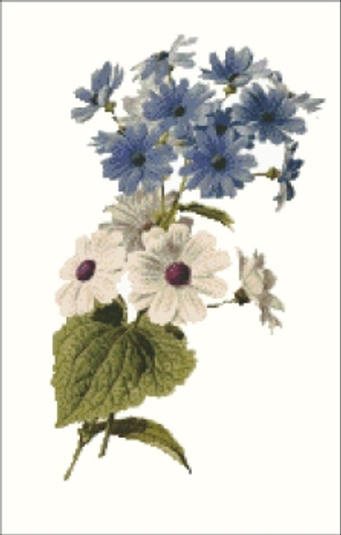 Cineraria Flower Cross Stitch Pattern