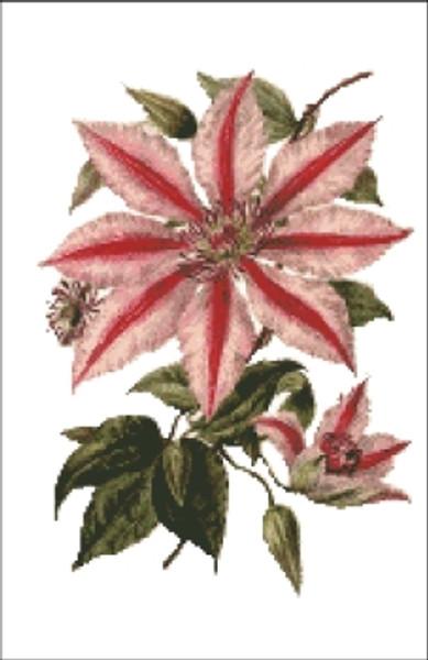 Clematis 10 Flower Cross Stitch Pattern