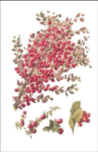 Cotoneaster Flower Cross Stitch Pattern