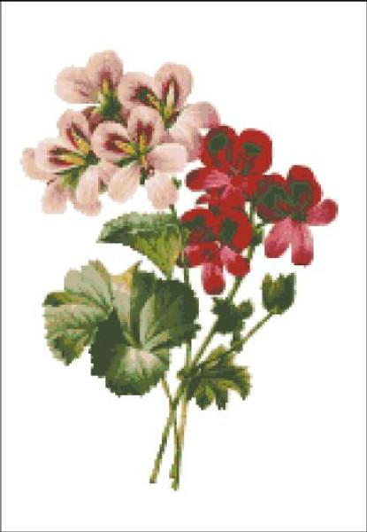 Geraniums Cross Stitch Pattern