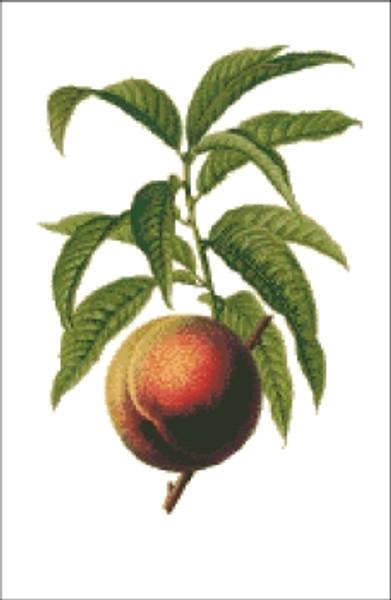 Peach Cross Stitch Pattern