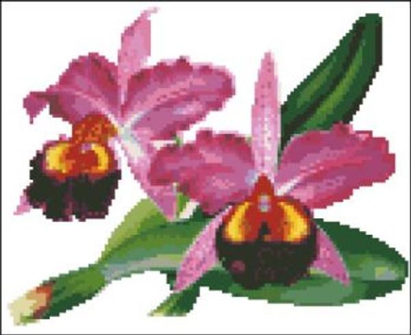 Orchid Pattern 701 (Cattleya Hardyana)