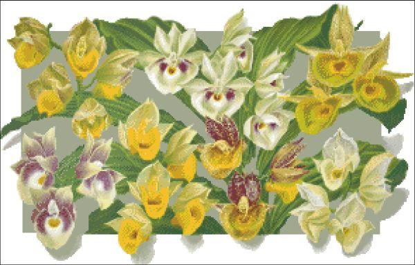Orchid Catasetum