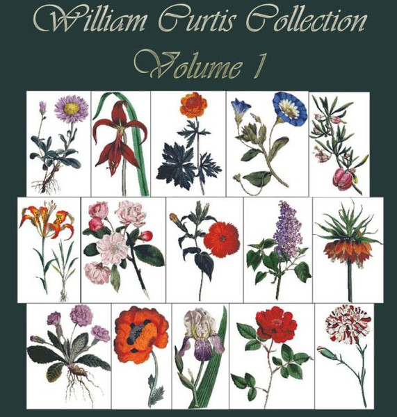 William Curtis Botanical Print Collection Volume 1