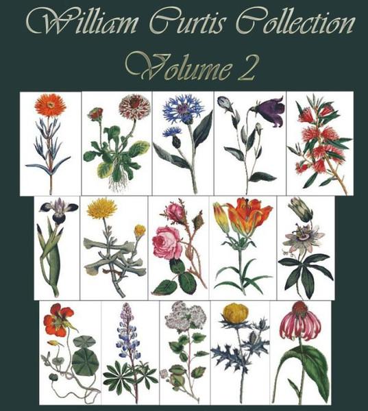 William Curtis Botanical Print Collection Volume 2