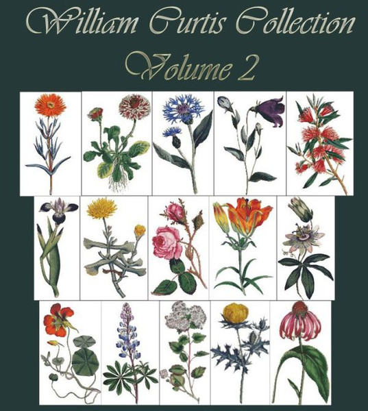 William Curtis Botanical Print Collection Volume 2