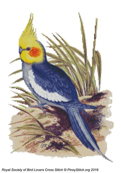 RSBL Cockatoo Cockatiel
