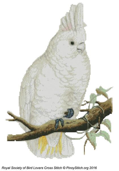RSBL Cockatoo Goffins