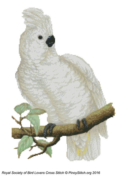 RSBL Cockatoo Great White Crested