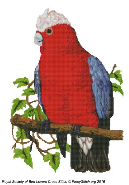 RSBL Cockatoo Rosebreasted