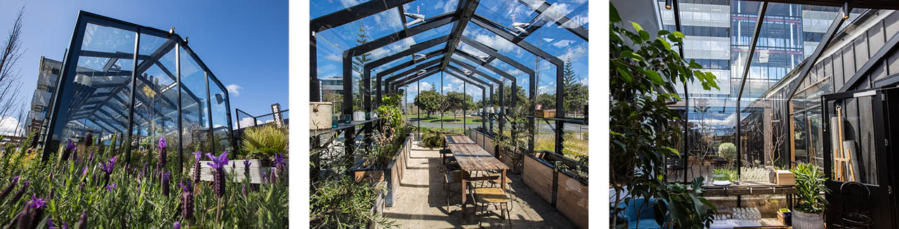smales-farm-architectural-glass-roof-hospitality-greenhouse-wide-space.jpg
