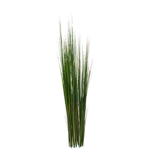 """Onion Grass - 50""""green,UNPOTTED - Set of 2"""