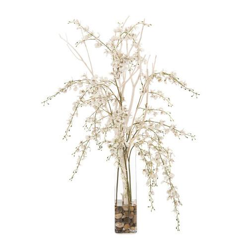 John Richard Mitsumata Orchids