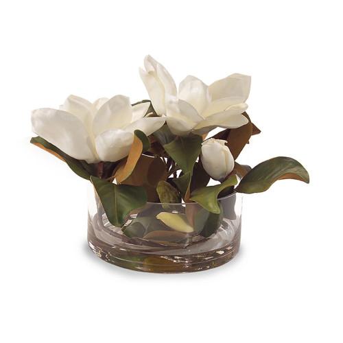 John Richard Magnolia Grandiflora