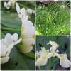 Wondrous Winter Pond Plant Collection